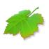 icon_app_breeze