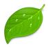 icon_app_coda